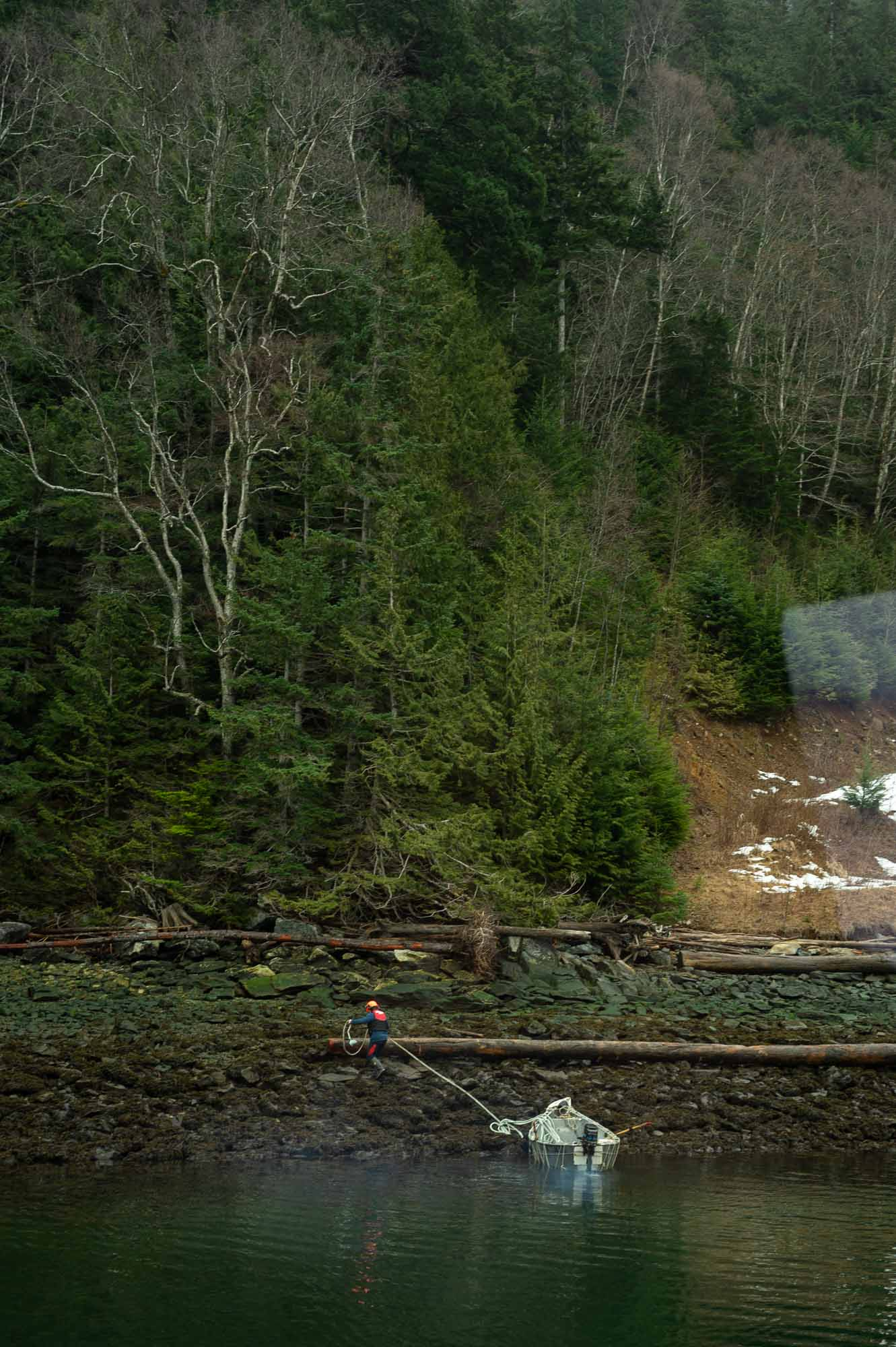 logging british columbia